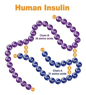 Control insulin to lose weight fast